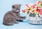 Kitty And Flowers On A Light Blue Background poster