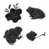 Vector Design Of Fauna And Reptile Sign. Set Of Fauna And Anuran Vector Icon For Stock. poster