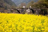 pic of old bridge  - Ancient stone bridge with oilseed reap flowers as foreground - JPG