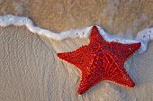 stock photo of lonely  - A lone Bahama starfish on the shore with suds of white waves roll around it