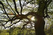 pic of diffraction  - Sun Shinning Through Tree Branches - JPG