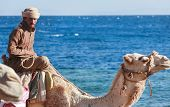 DAHAB, EGYPT - JANUARY 30, 2011: Bedouin man rides  a camel on beach during safari. Local bedouins r