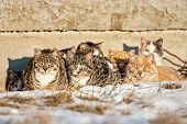 foto of huddle  - A group of feral cats huddled together to keep warm near the wall of an old abandoned home  - JPG