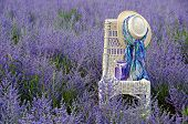 stock photo of purple sage  - Hat with scarf and purple mason jar on a wicker chair in a field of Russian sage - JPG