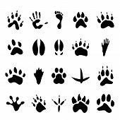picture of footprint  - Collection of 20 black vector illustrations of footprints - JPG