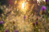 picture of meadows  - the beautiful sunrise over a blossoming meadow - JPG