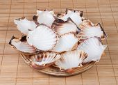 stock photo of scallop-shell  - Wooden plate with shell scallops on a bamboo background - JPG