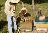 stock photo of smoker  - a beekeeper checked his hives with smoker - JPG
