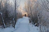 image of walking away  - Man walks away on the snowy pathway - JPG