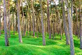 foto of battlefield  - The forest wood and craters on battlefield of Vimy ridge - JPG
