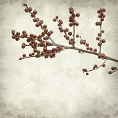 image of winterberry  - textured old paper background with red winterberry - JPG