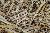 stock photo of haystack  - Needle in Haystack - JPG