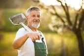 image of hoe  - Portrait of a handsome senior man gardening in his garden - JPG