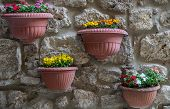 image of plant pot  - Several plants in tera cotta pots hangin from a wall - JPG