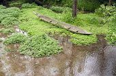 foto of swamps  - hand made canoe in the swamp grass - JPG