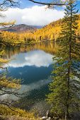 picture of blue spruce  - Autumn spruce over the lake on a background of yellow forest and blue sky - JPG