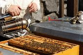 foto of honey bee hive  - bee keeper with smoker in hand on bee hive - JPG