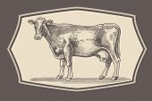picture of husbandry  - cow in graphical style in the frame - JPG