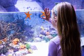 picture of starfish  - Young woman touching a starfish - JPG