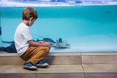 image of manta ray  - Young man looking at manta ray in a tank at the aquarium - JPG