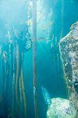 picture of algae  - Fish swimming in a tank with algae at the aquarium - JPG