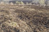foto of prairie  - The charred remains following a prairie fire in Wisconsin - JPG