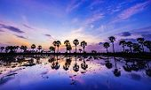 pic of tourist-spot  - Colorful sunset or sunrise landscape with silhouettes of palm trees on Chau Doc city - JPG