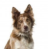 foto of 15 year old  - Border Collie  - JPG
