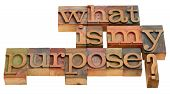 stock photo of philosophical  - what is my purpose  - JPG