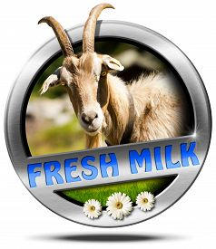 picture of goat horns  - Metallic round icon or symbol with head of goat with horns text fresh milk and three daisy flowers - JPG