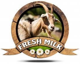 foto of goat horns  - Wooden round icon or symbol with head of goat with horns text fresh milk and three daisy flowers - JPG