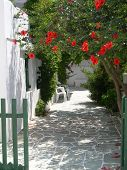 picture of greek-island  - greek island greece scene taverna with flowers garden - JPG