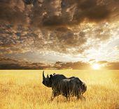 Постер, плакат: Rhino в парке Этоша