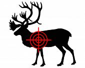 pic of caribou  - Detailed and colorful illustration of caribou crosshair - JPG