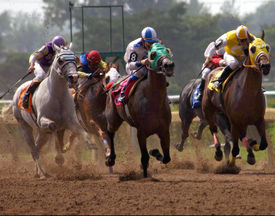picture of running horse  - Horses Racing - JPG