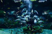 Feeding Fish / Man Dive Feed School Fish Eating Food Underwater Deep Ocean Live poster