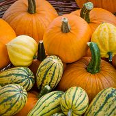 pic of farmers market vegetables  - Organic pumpkins and delicata squash sold at a farmers - JPG