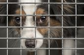 stock photo of puppy eyes  - Closeup of a dog looking through the bars of a cage - JPG