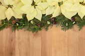 picture of poinsettias  - Poinsettia flower arrangement with mistletoe - JPG