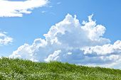 pic of thunderhead  - This is a picture of grass and thunderhead - JPG