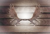 stock photo of deer rack  - Closeup horn moose on wooden wall texture of the seamless wood - JPG