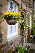 stock photo of english cottage garden  - Yellow flowers in hanging baskets outside an english stone cottage