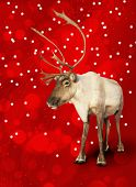 foto of caribou  - Caribou reindeer on red Christmas bokeh background - JPG