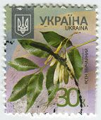 UKRAINE - CIRCA 2013: A stamp printed in Ukraine shows image of the Fraxinus excelsior  known as the