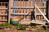 foto of stockade  - An old wood fence with a colorful rain barrel - JPG