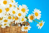 Bouquet Of Daisies In A Wicker Basket