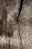 stock photo of interrupter  - A crack in a log interrupts the tree rings of an old tree - JPG