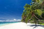 Tropical Coastline With Beautiful Palm And White Sand