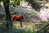 foto of great horse  - Brown horse grazing in the field of the Altesina mountain - JPG