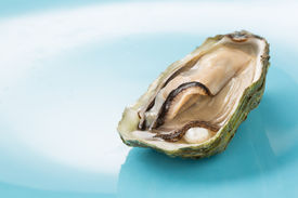 stock photo of pearl-oyster  - oyster with a pearl on a blue background - JPG